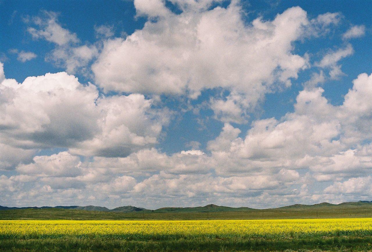 Urban Spring Fever Mongol Minolta Fuji Filmphotogrraphy Flowe Yellow Blue Cloud Contrast