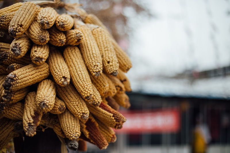 Corns Dried Food Food Culture Freshness Hanging Local Food Culture Tradition Travel Abundance China Close-up Corn Dried Dried Corn Drying Focus On Foreground Healthy Eating Local Food Local Restaurant Nature No People Rope Tied Up Traditional Yellow Food Stories