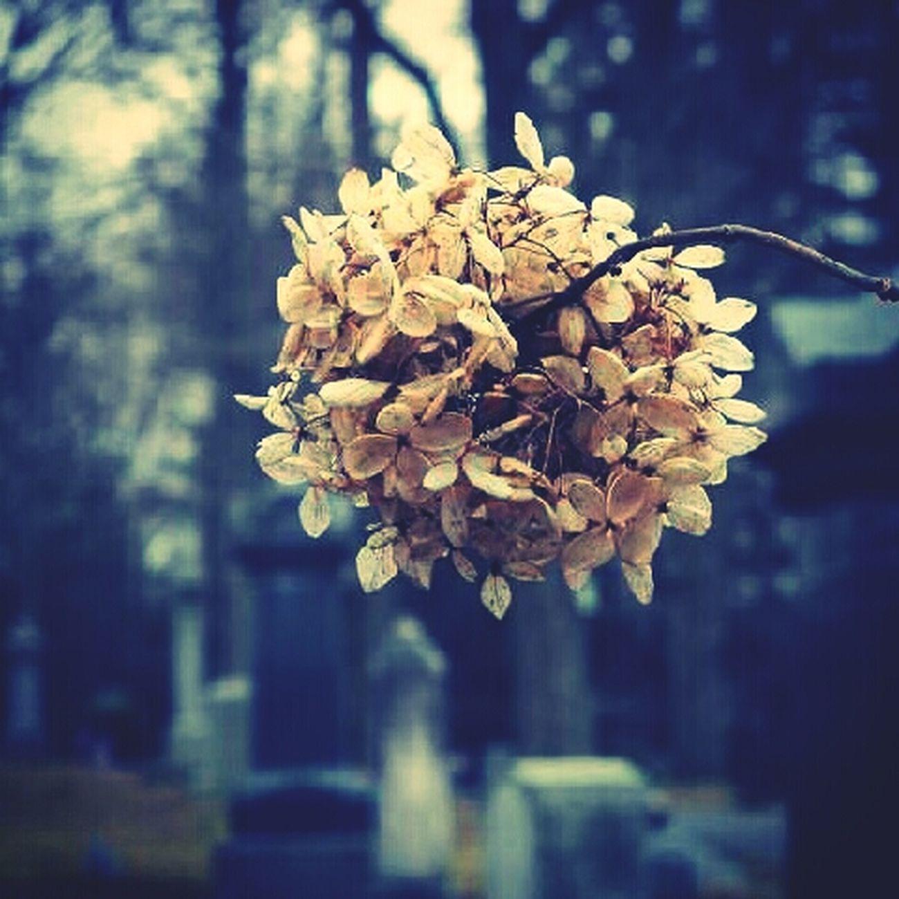 Flowers Cemetery Beauty In Decay Deadplaces Deadflowers