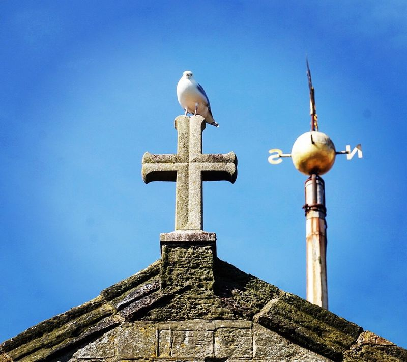 Church perch Blue Religion Low Angle View Bird Day Sunlight No People Animal Themes Animals In The Wild Outdoors Animal Wildlife Built Structure Clear Sky Sky Nature Architecture Perching