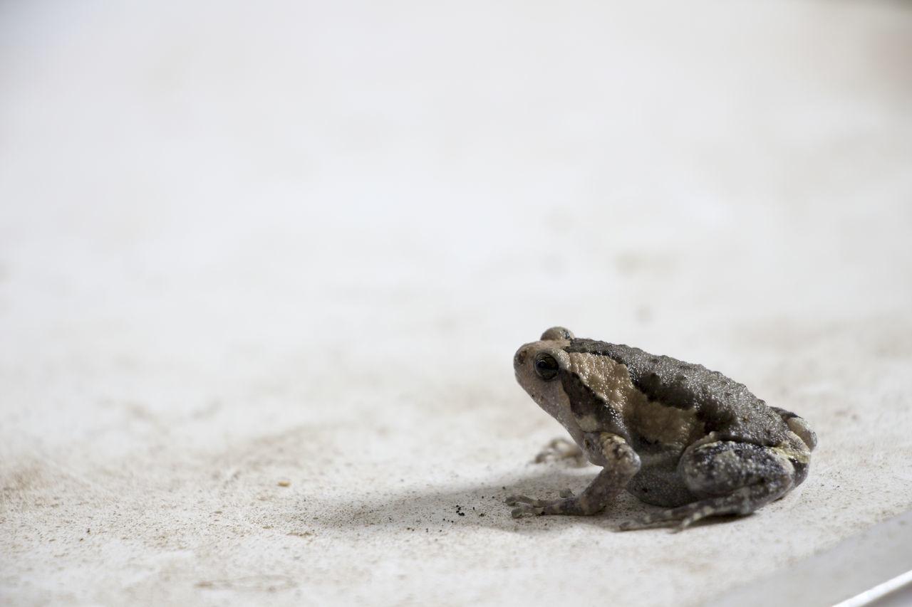 Beautiful stock photos of schildkröte, one animal, sand, reptile, animal themes