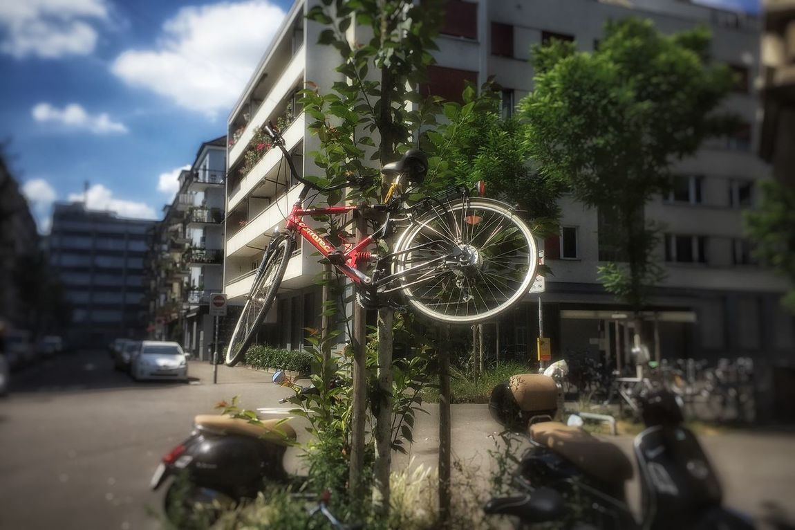 Daylight Outside Summer Bycicle Pranks someone got pranked tonight and now bikes grow on trees....