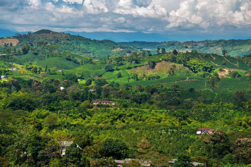 A view of the landscape in Colombia's coffee producing region. Agriculture Blue Bright Cloud Coffee Colombia Country Countryside Farm Green Horizon Landscape Manizales Natural Nature Outdoors Quindío Risaralda Rural Scenic Sky Sunny Travel Tree View
