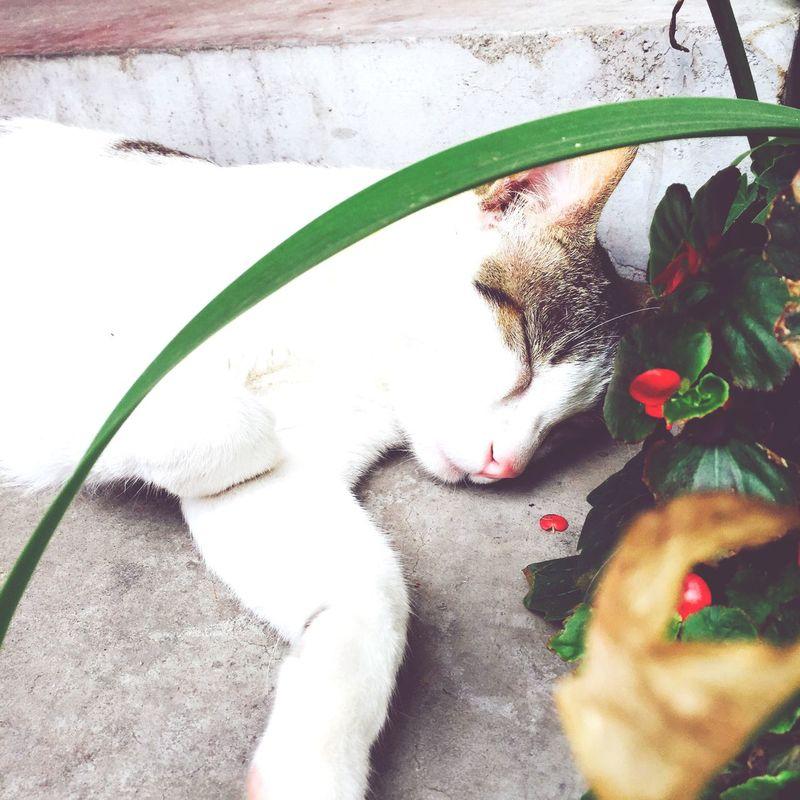 少年不带花🌺 Tea Is Healthy Relaxing Chatting Cat