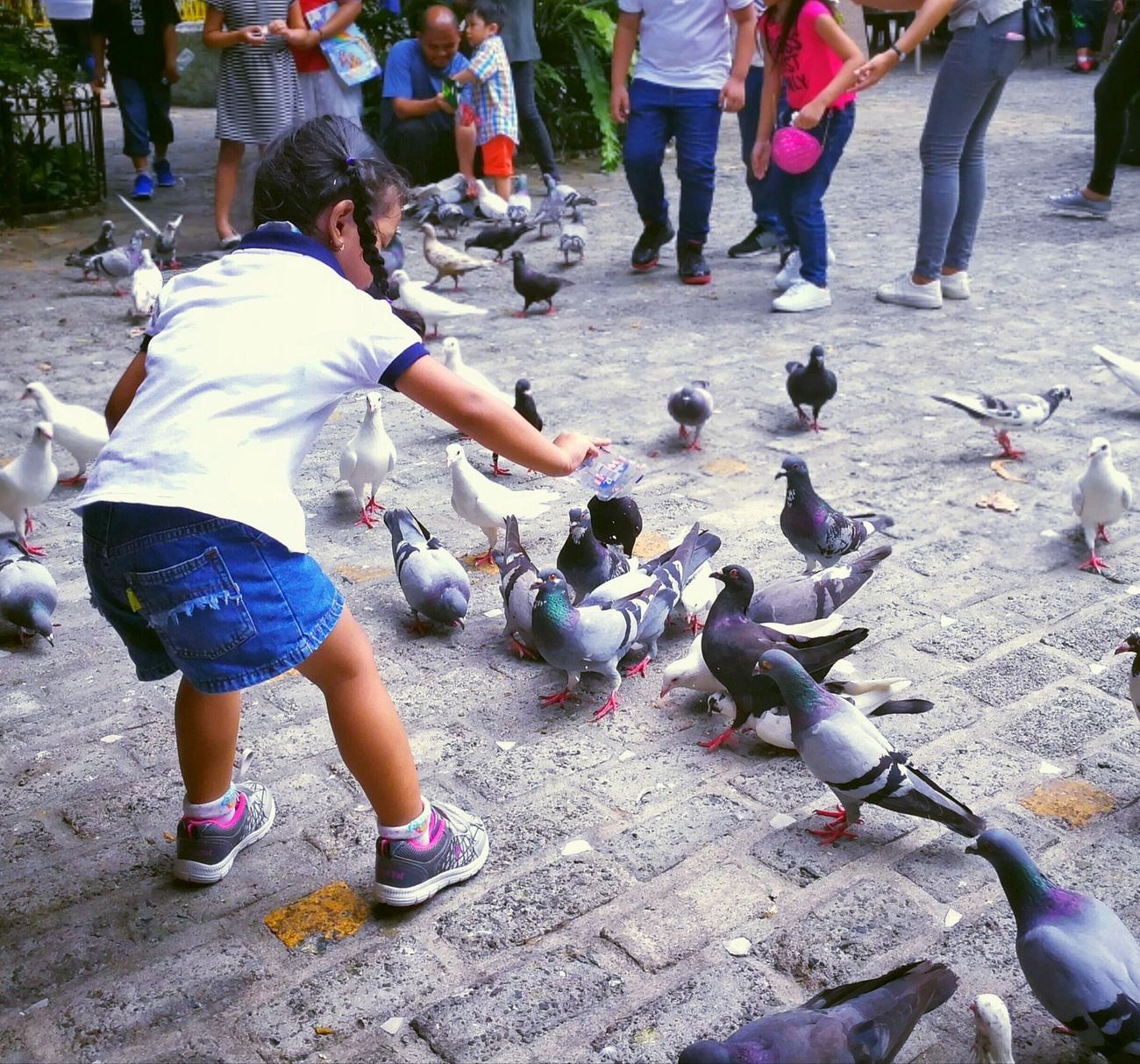 Real People Bird Outdoors Leisure Activity Day Girls Large Group Of Animals Childhood