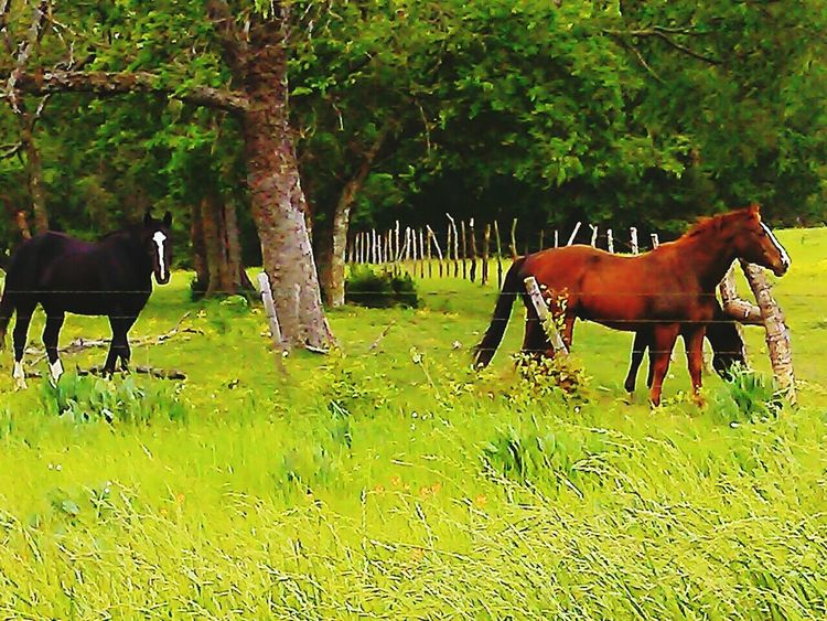Pasture with horses Beautiful sights! Out To Pasture Horses Beautiful Creature Farm Animals