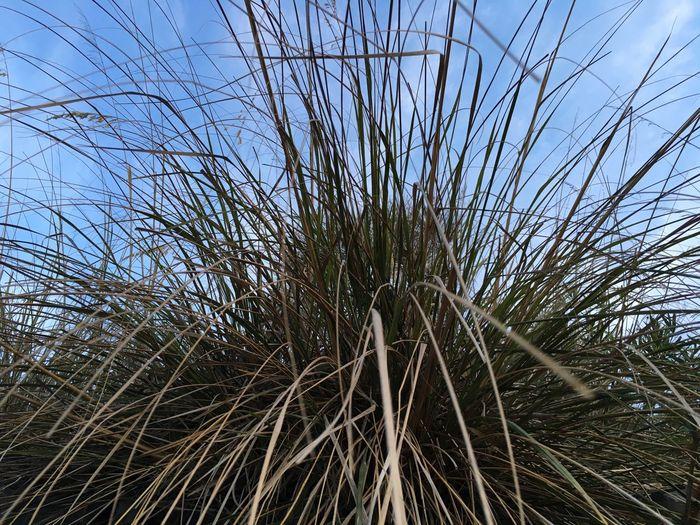Ropegrass Grass Rope Grassland Nature Minimalism Abstract Minimalobsession