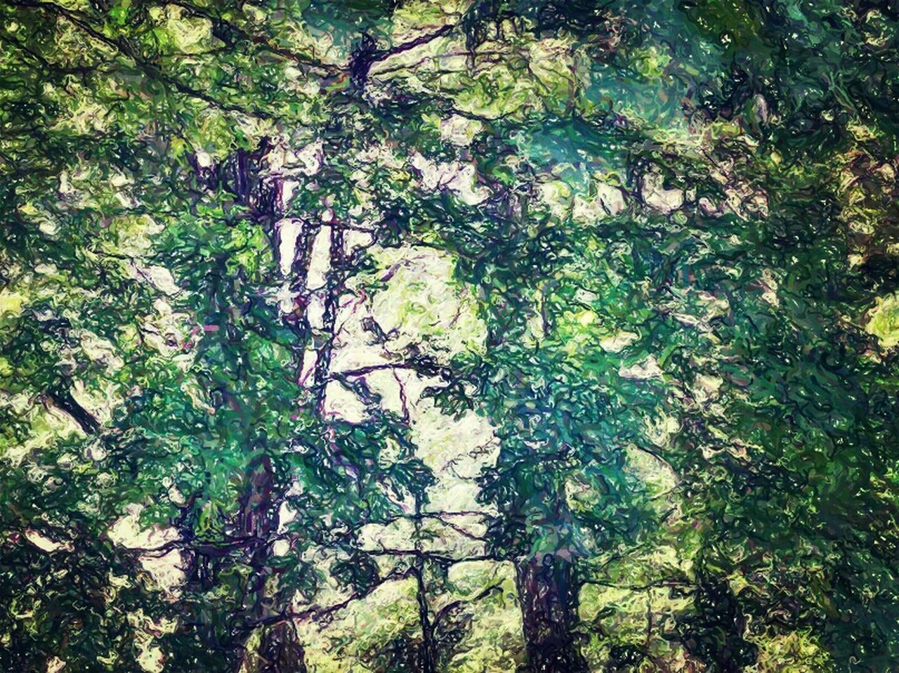 tree, nature, forest, growth, tree trunk, branch, beauty in nature, day, outdoors, no people, green color, plant