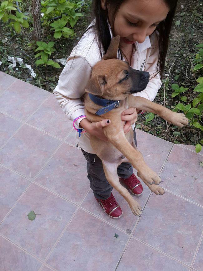 13 yıllık köpeğimiz polatı kaybettim geçen hafta ...😔artık yeni köpeğim Cesur Yeni Köpekyavrusu Benim Cesur ummm ögrencim ömür ün emaneti bana hediye sı😊 🐶🐕 Güzelsin Köpek Köpeksevenler Köpeksevgisi ❤ Cesurum