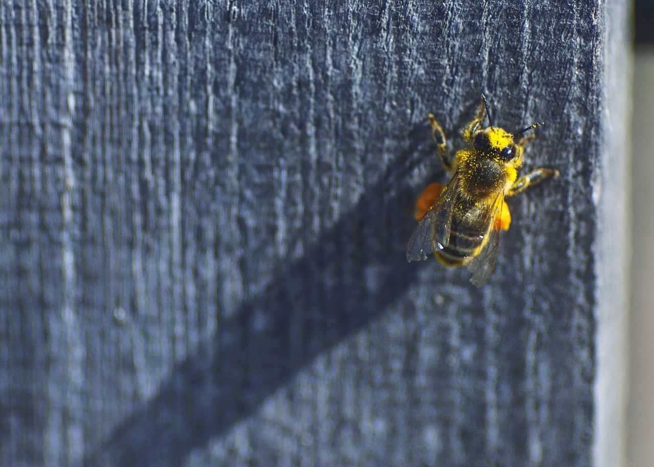 Beautiful stock photos of bee, Animal Themes, Animals In The Wild, Bee, Brunico - Bruneck