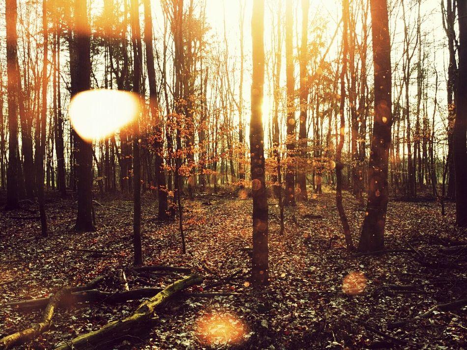 The Forrest Sunshine