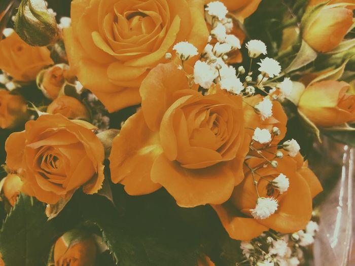 Serenity Flowers