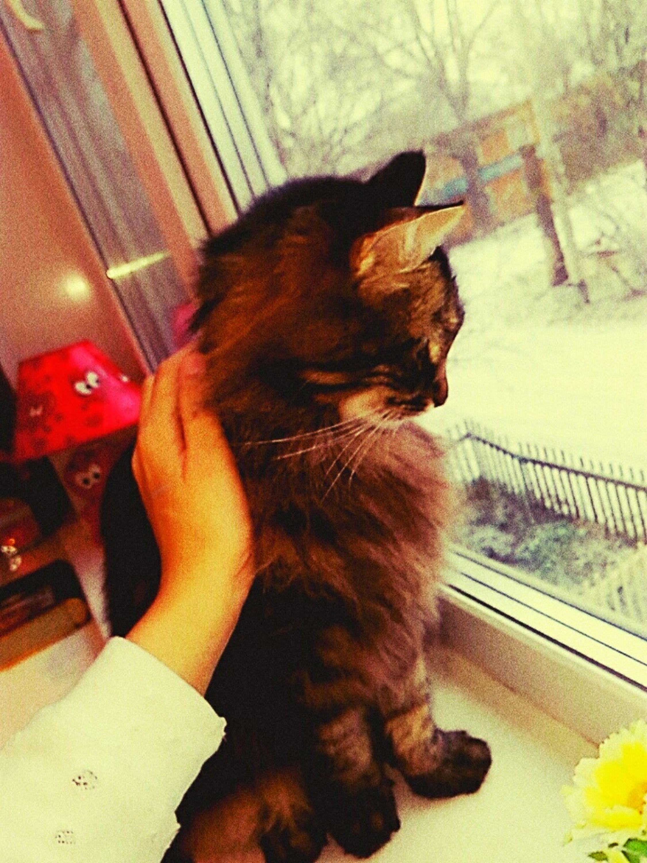 Cat Day 💕friends😍freetime💕l First Eyeem Photo