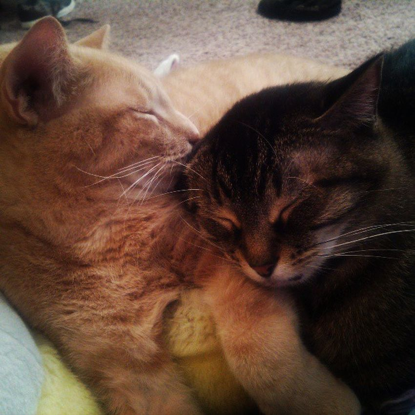 Snuggle buddies for life Pur Meow Catlady SnuggleBuddies icanthandlethecuteness