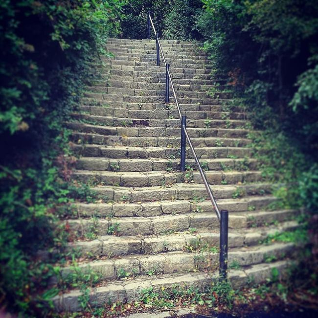 Hilsea Lines Rampart Steps. Ancient Monument Day Deterioration Diminishing Perspective Green Color Growth Hilsea Lines Hilsea Lines Ramparts Nature No People Old Outdoors Plant Portsea Portsmouth Ramparts Steps Steps Stone Material Stone Steps Tree