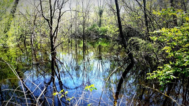Landscapes With WhiteWall Nature Swamp Springtime White Rock Lake