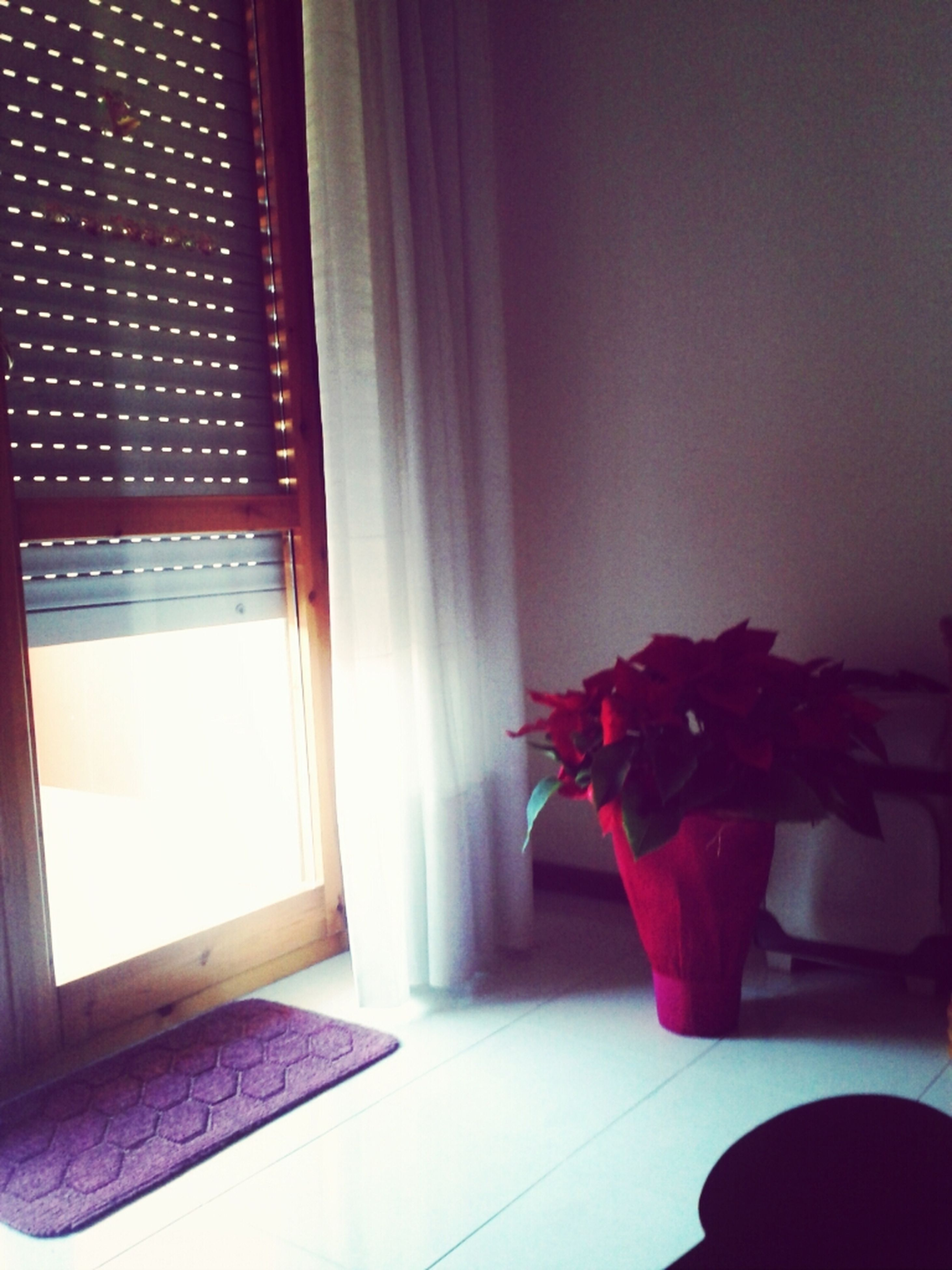 indoors, window, home interior, curtain, house, domestic room, glass - material, sunlight, window sill, transparent, door, absence, flower, potted plant, table, no people, wall, built structure, day, plant