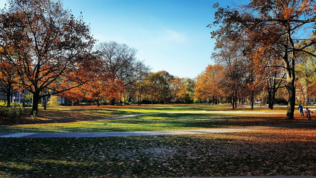 tree, autumn, change, tranquility, nature, day, outdoors, beauty in nature, leaf, bare tree, sky, tranquil scene, growth, scenics, no people, grass, travel destinations, golf course, golf