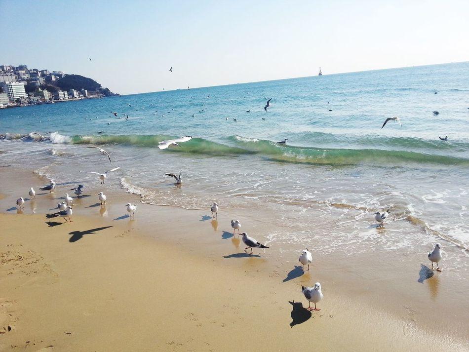 Seagulls in Beach 해운대! In Busan Morning Motion Capture Wavegodphotography Taking Photos