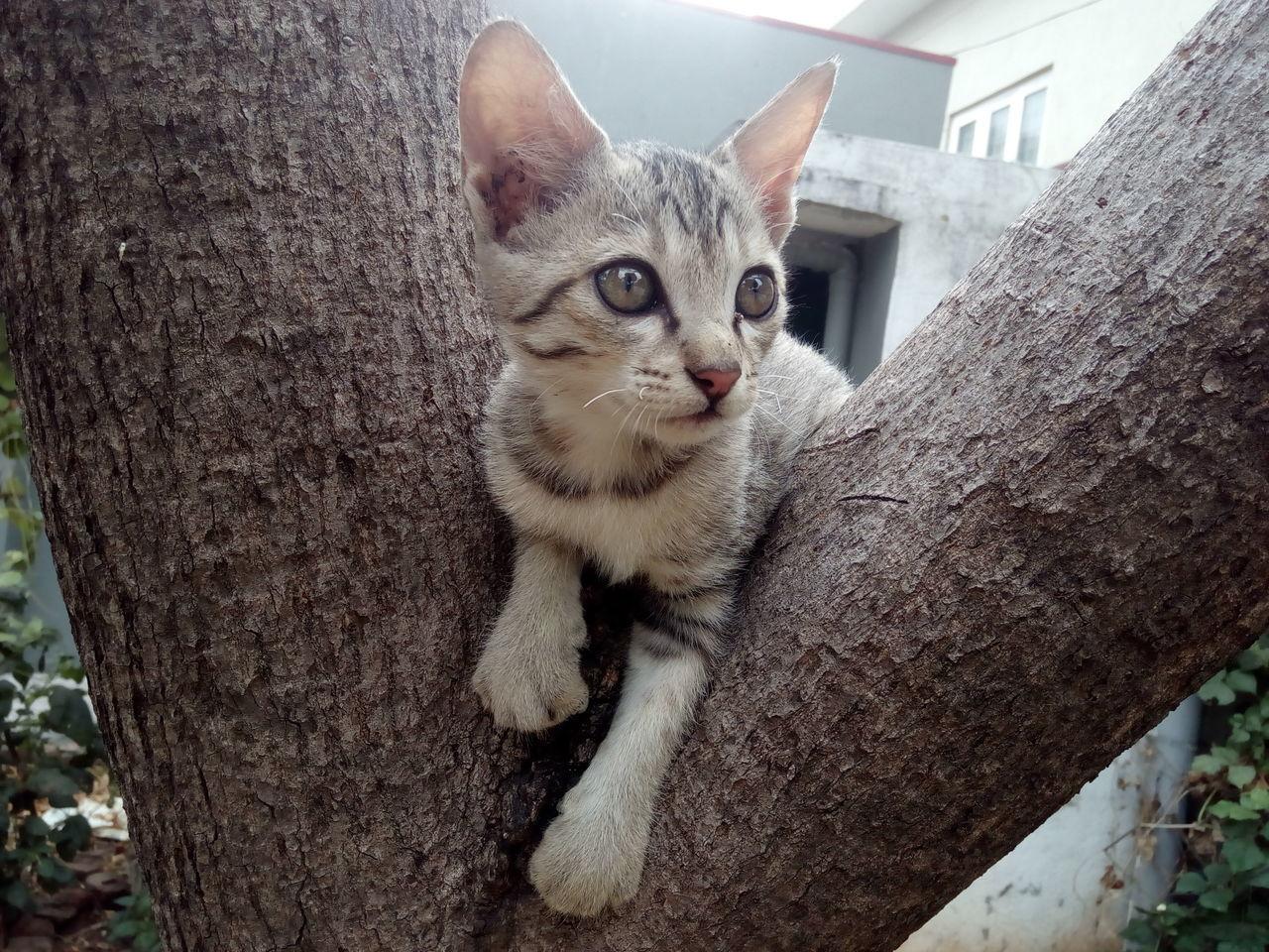 Beautiful stock photos of baby katzen, domestic cat, domestic animals, animal themes, pets