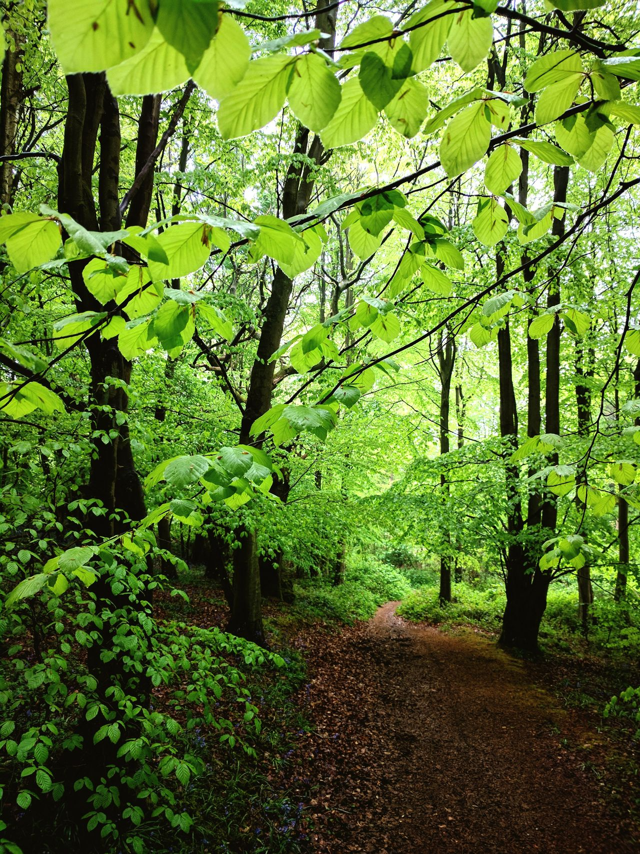 Green Color Growth Nature Outdoors Tree No People Beauty In Nature Leaf Beech Landscape Trees And Bushes Tree England Badby