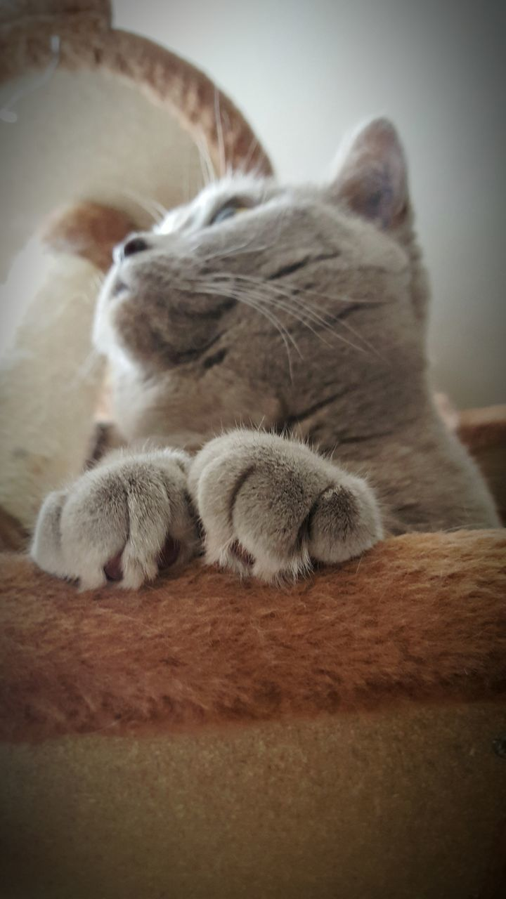 domestic cat, animal themes, pets, sleeping, feline, domestic animals, one animal, cat, indoors, relaxation, mammal, eyes closed, no people, close-up, day