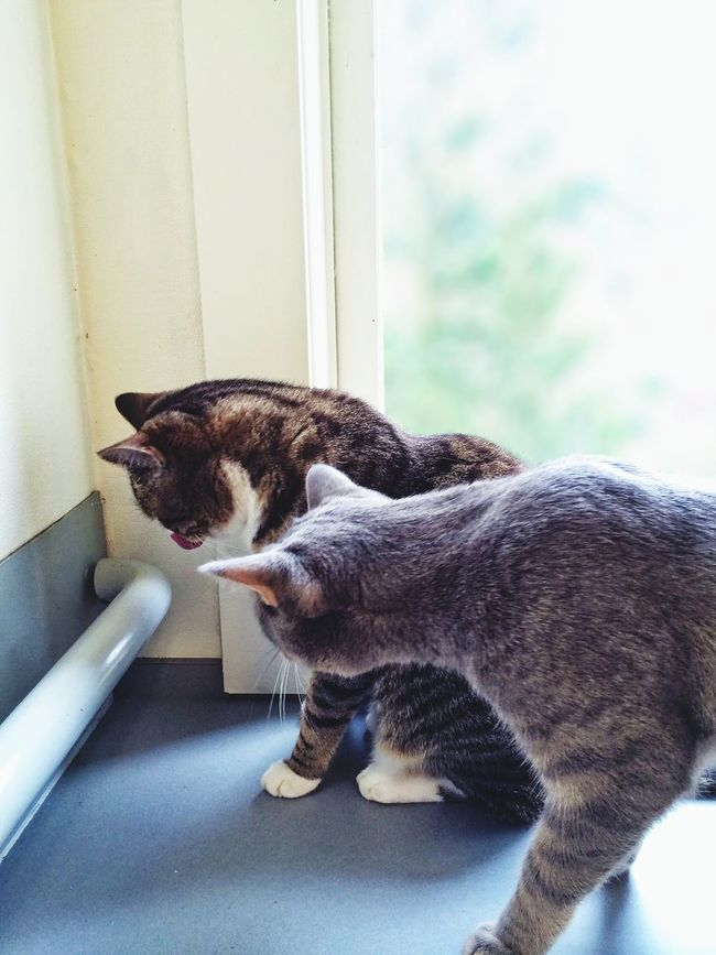 What are you doing BomBi? Ewww! Mama come quick, BomBi is eating little bugs again! (I'm too grown up to do that, Aunties & Uncles...) Tadaa Community Mel&BomBi Cat Cute Pets