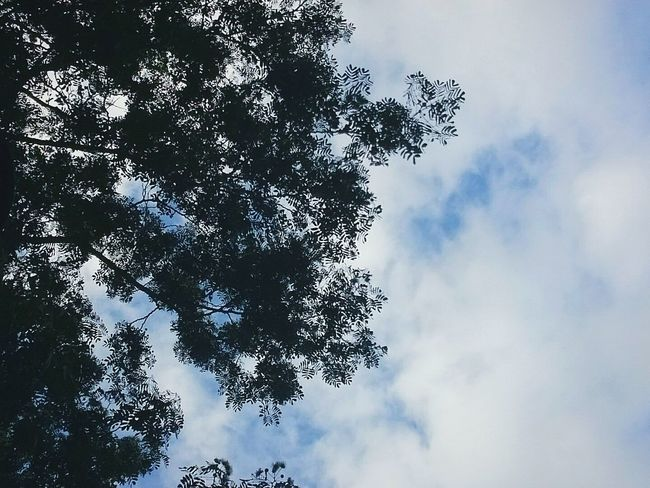 Low Angle View Tree Sky Cloud - Sky Growth Branch Tranquility Nature Cloud Beauty In Nature Outdoors Solitude Clear Sky Green Color EyeEm EyeEm Best Shots