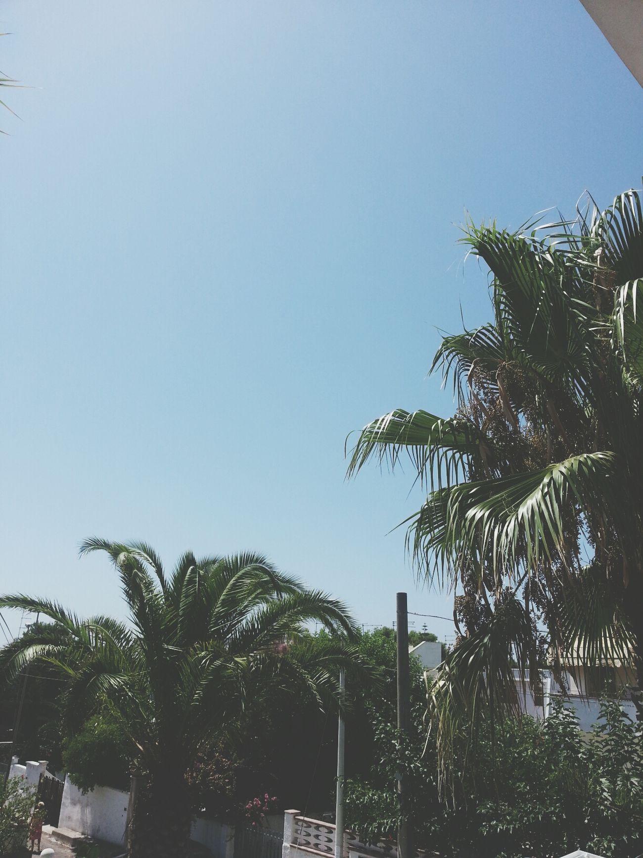 Palms Summer Green View