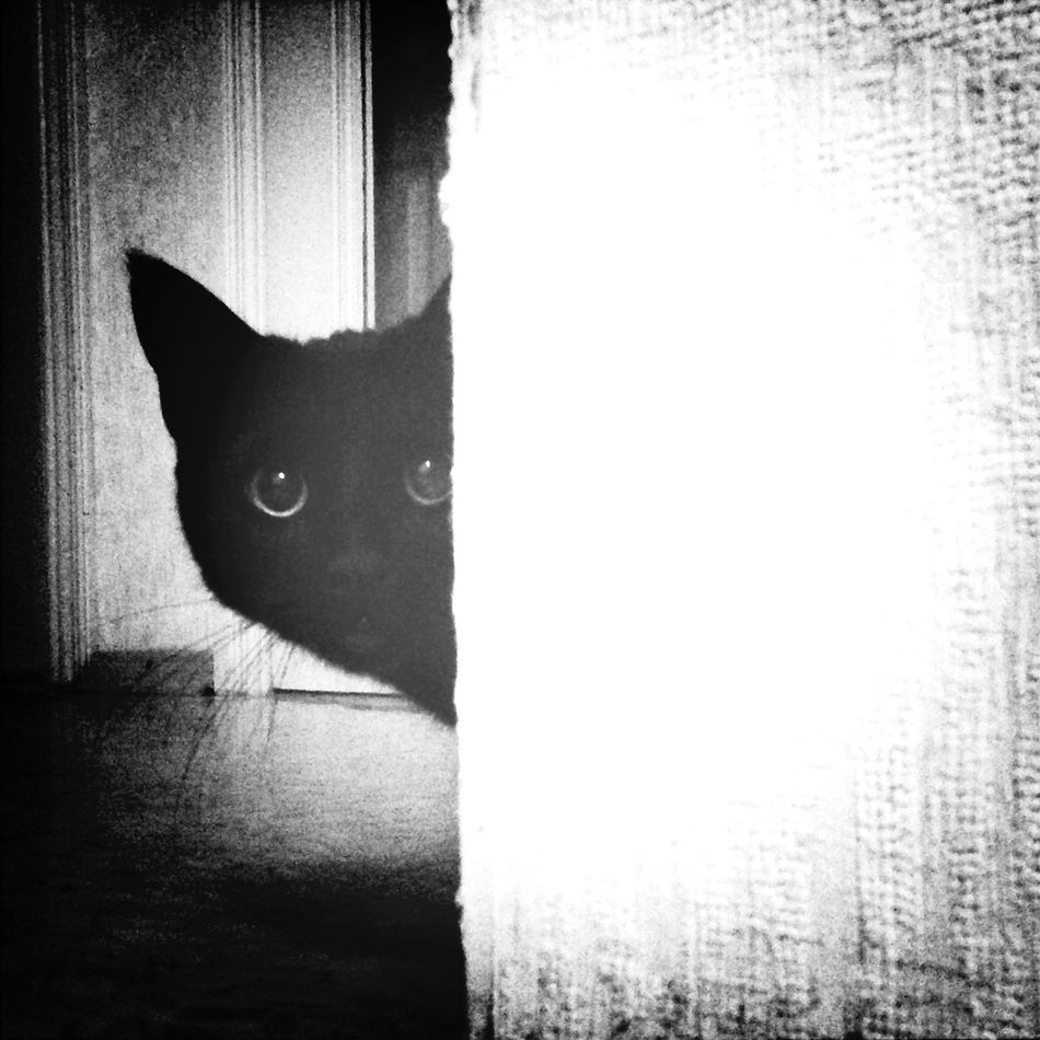Dark Lord Black Cat Cat Plutón I Love My Cat