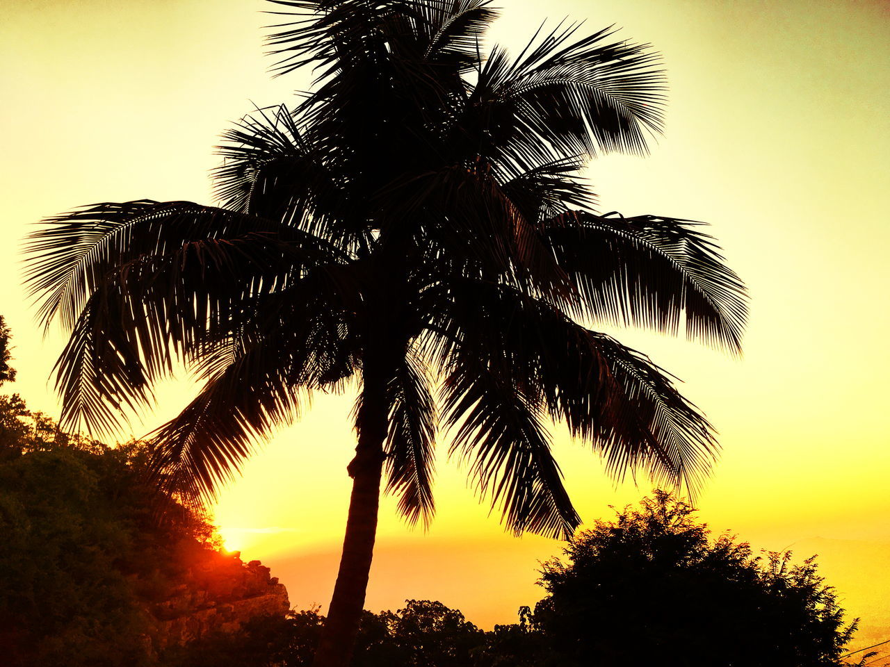 Beauty In Nature Day Low Angle View Nature No People Outdoors Palm Frond Palm Tree Scenics Silhouette Sky Sunset Tranquil Scene Tranquility Tree Tropical Climate