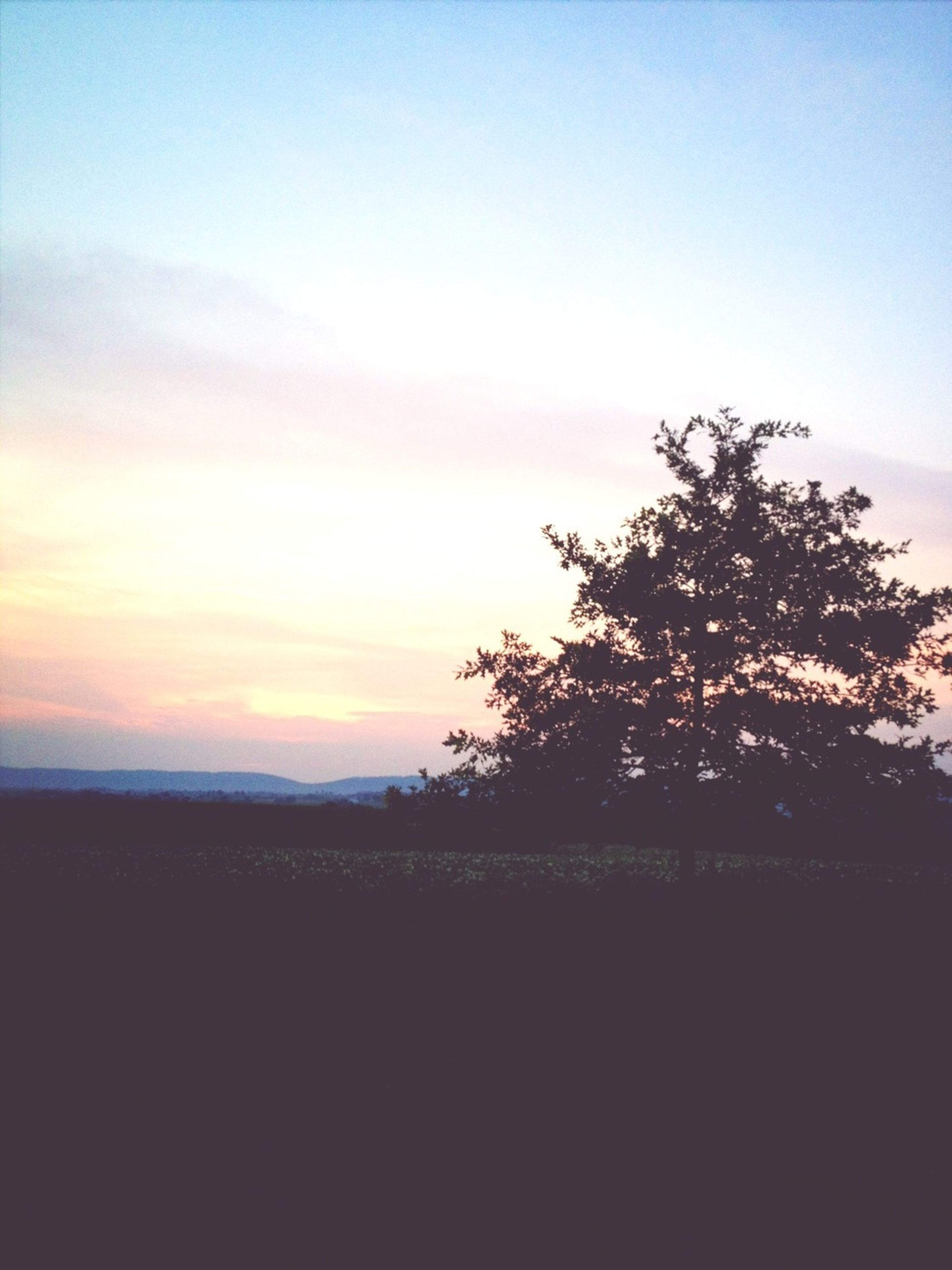 silhouette, sunset, tranquil scene, tranquility, tree, landscape, scenics, sky, beauty in nature, copy space, field, nature, idyllic, dusk, clear sky, horizon over land, non-urban scene, outdoors, remote, no people