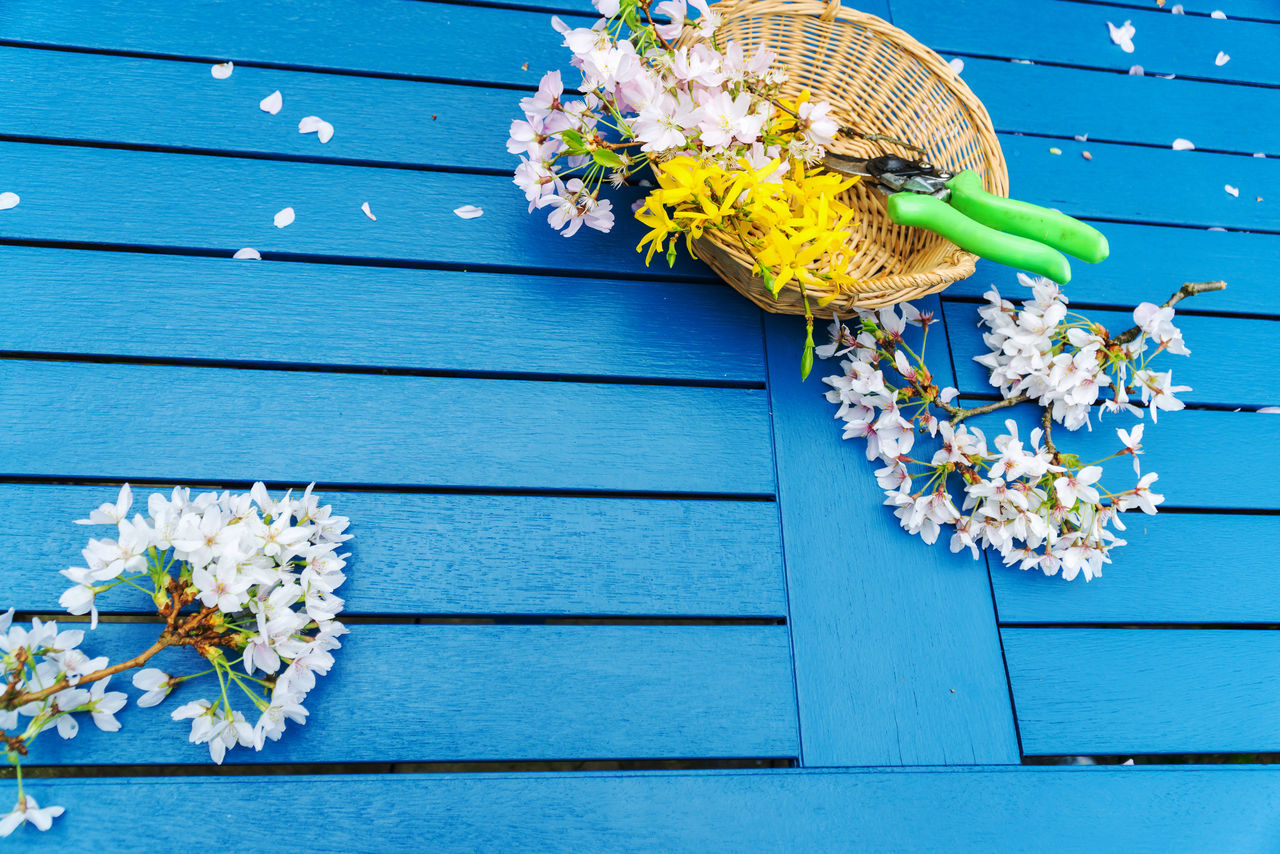 Cherry blossom display on a blue table Blue Blur Background Centre Focus Cherry Blossom Day Daytime Display Flowers,Plants & Garden Outdoors❤ Outside Photography Petals🌸 Pink Table Yellow