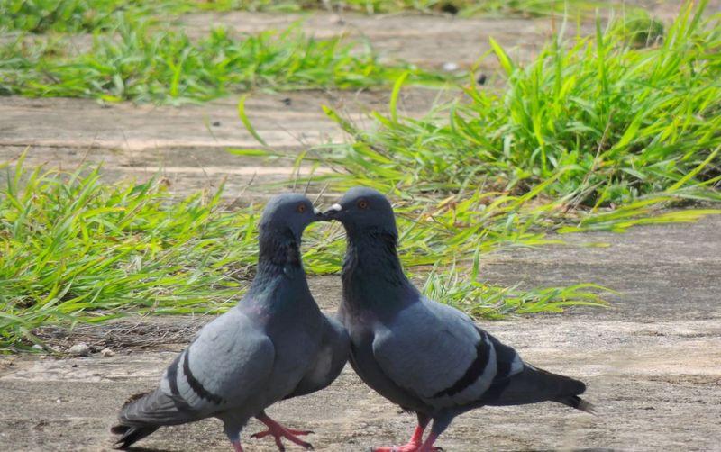 EyeEmSenses HappyValentinesDay❤ Love Red Love For Animals India Goa