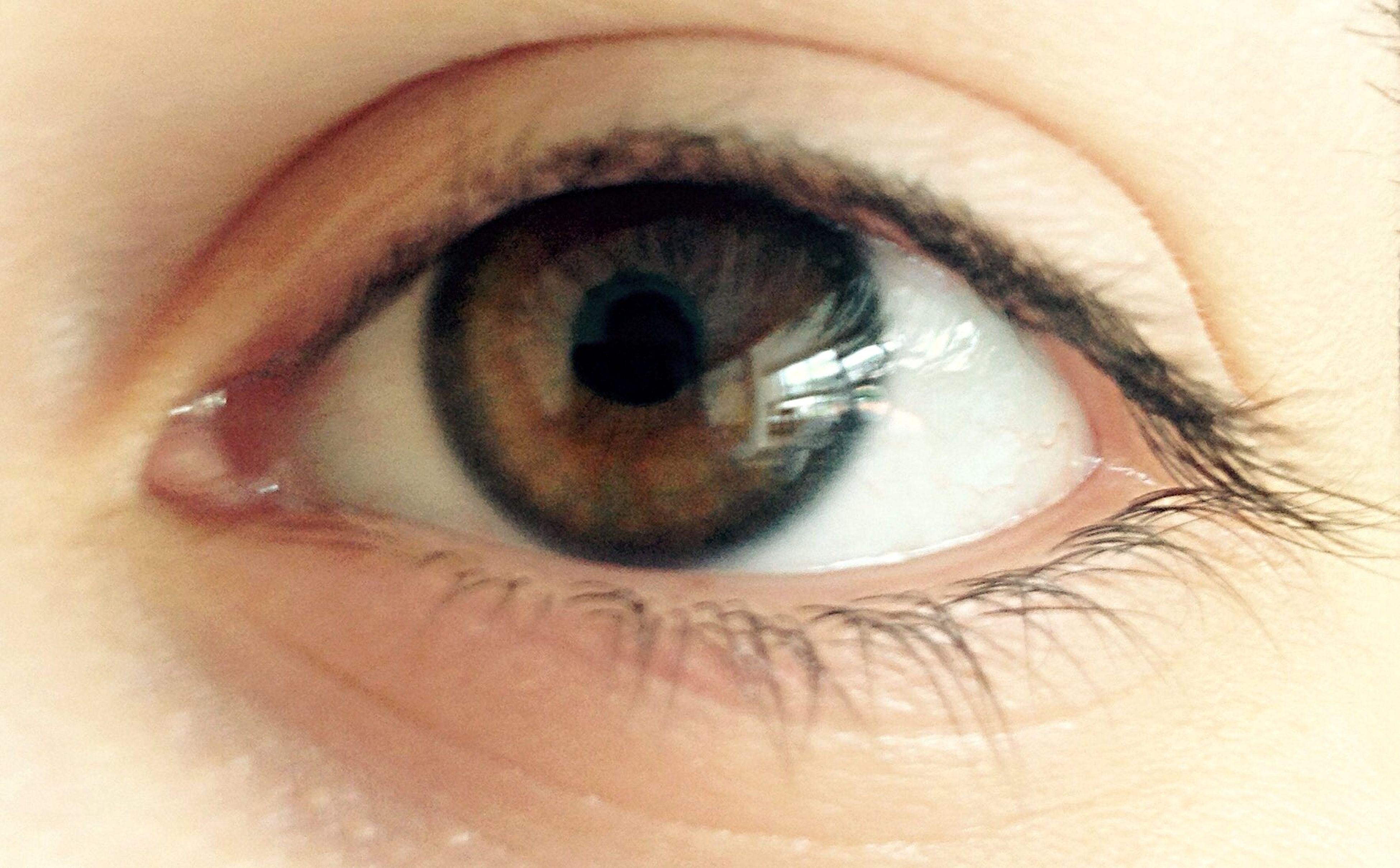 human eye, eyelash, eyesight, sensory perception, close-up, part of, extreme close-up, eyeball, human skin, iris - eye, looking at camera, portrait, extreme close up, full frame, unrecognizable person, eye, vision