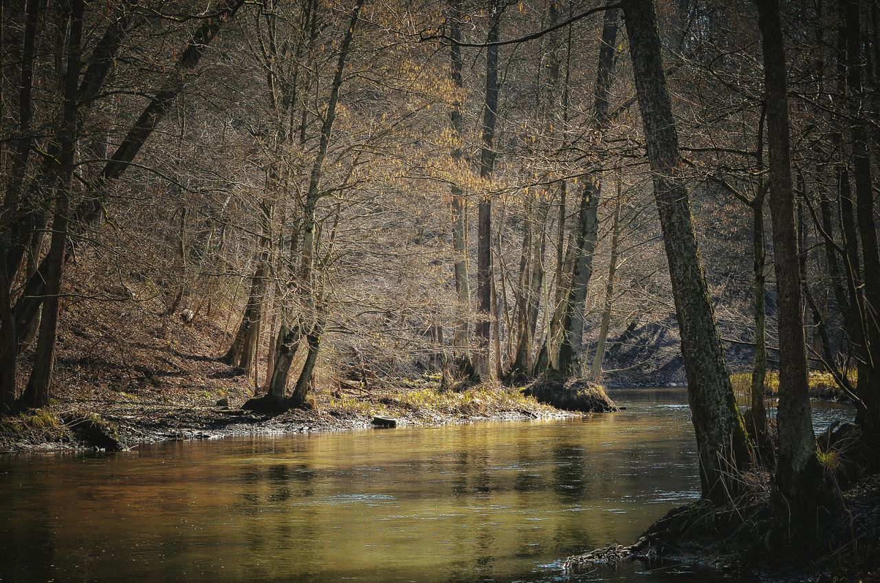 Nature Water Day Outdoors Beauty In Nature Tree No People Forest Trees Forest Photography Rzeka Forest River Forest Warmia Poland Las River In Forest Wild River łyna Polska Olsztyn Warmia Nature Photography River Collection River Life