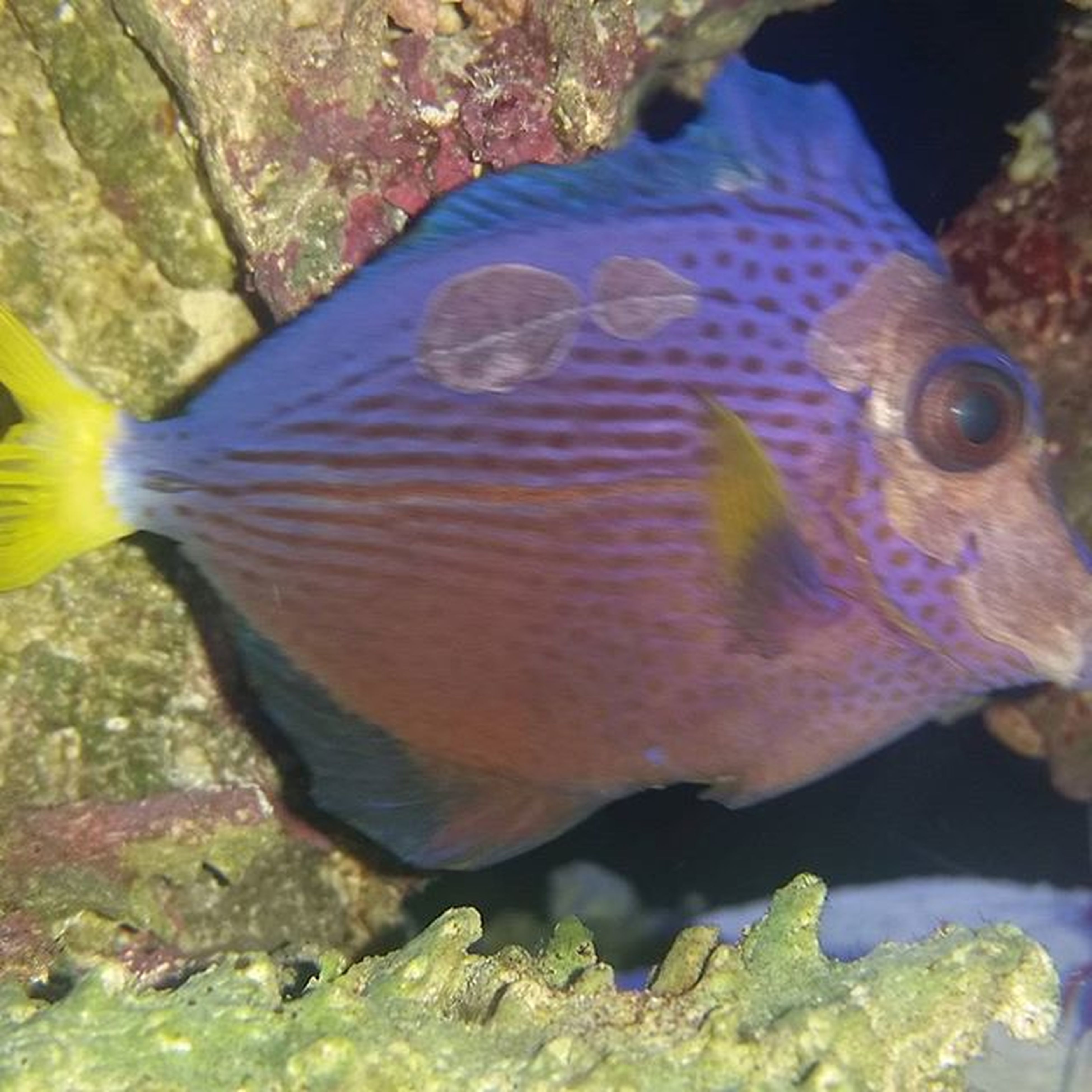 underwater, animal themes, water, fish, animals in the wild, sea life, undersea, swimming, wildlife, one animal, rock - object, close-up, nature, beauty in nature, natural pattern, aquarium, coral, aquatic, rock, no people