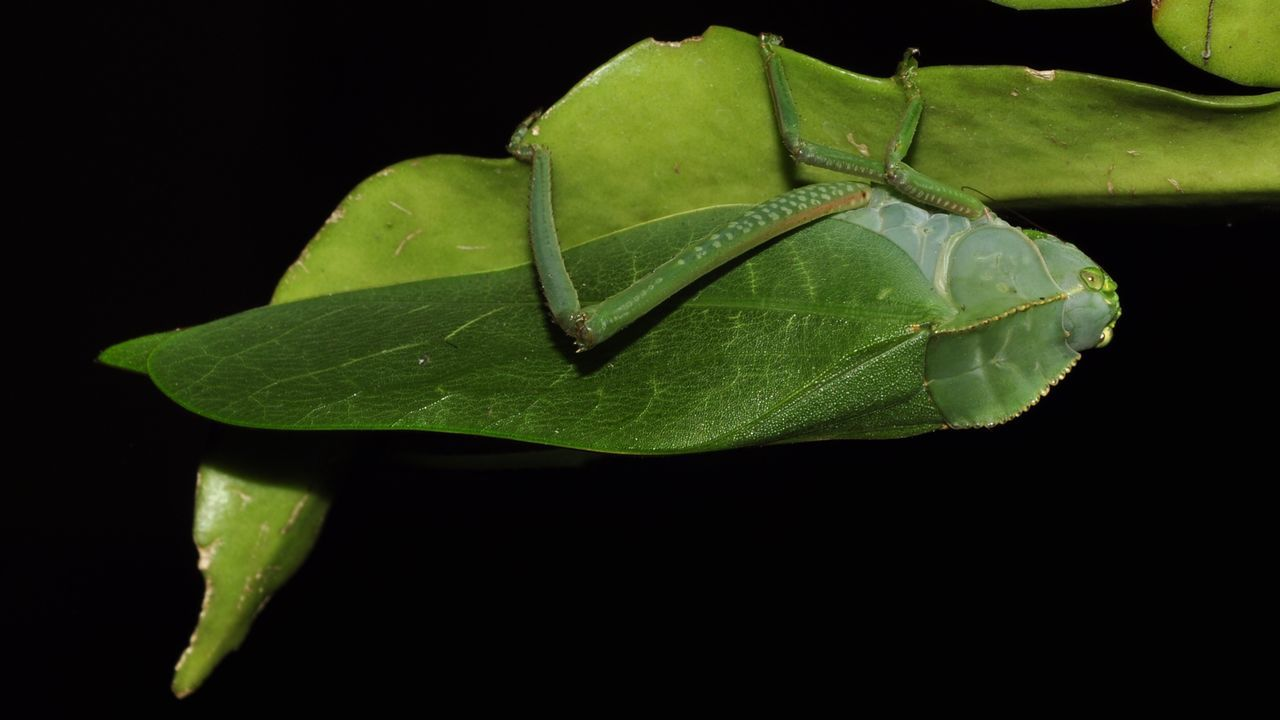 leaf, black background, green color, close-up, no people, nature, plant, growth, freshness, beauty in nature, night, water, studio shot, outdoors, fragility