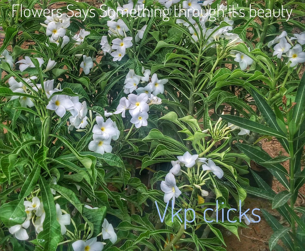 growth, nature, leaf, green color, plant, beauty in nature, freshness, fragility, no people, flower, outdoors, day, blooming, flower head