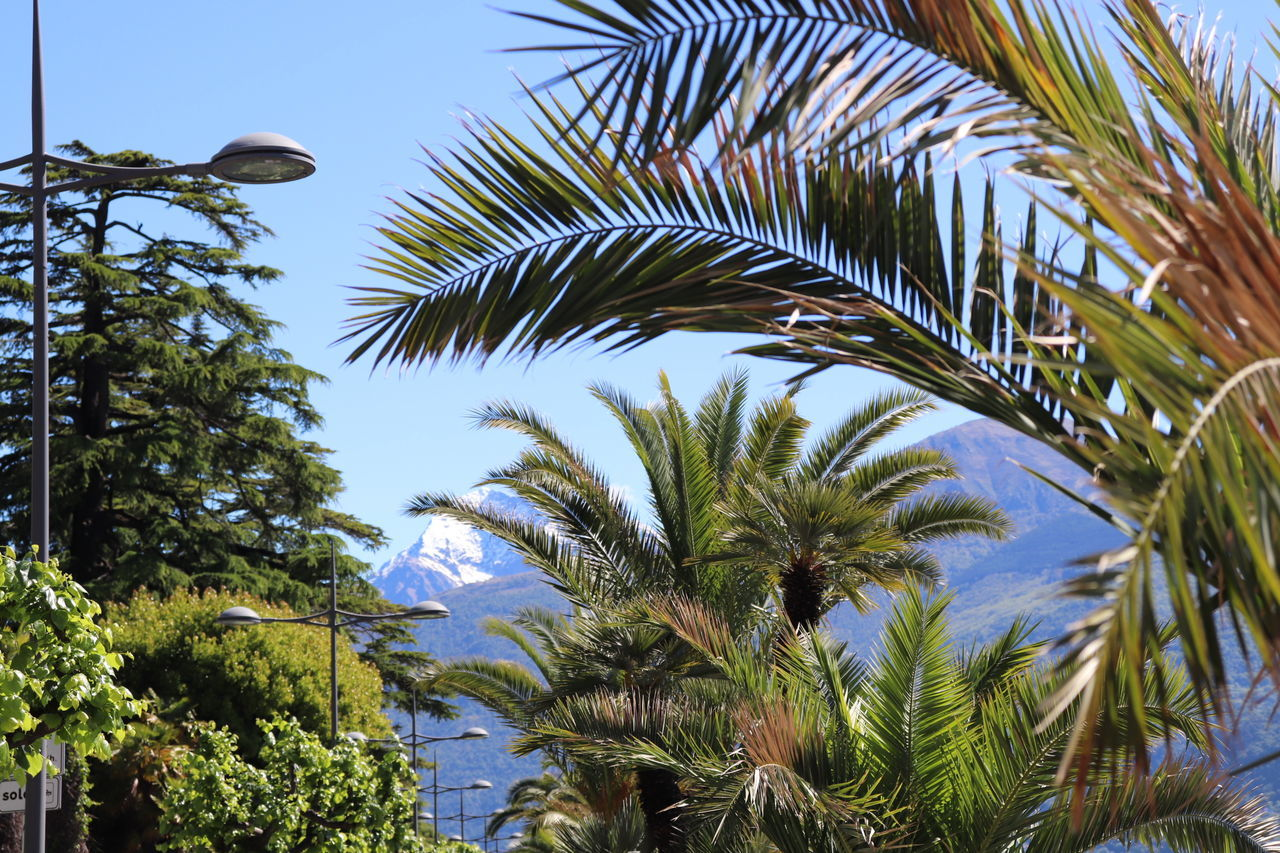 Palm Tree Low Angle View Growth Nature Beauty In Nature Outdoors No People Mountain Lakecomo