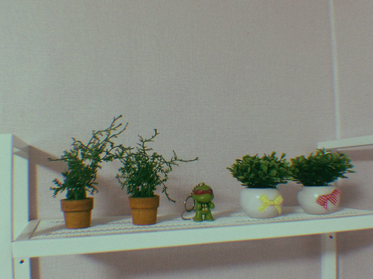 potted plant, growth, no people, plant, indoors, green color, nature, close-up, day, freshness