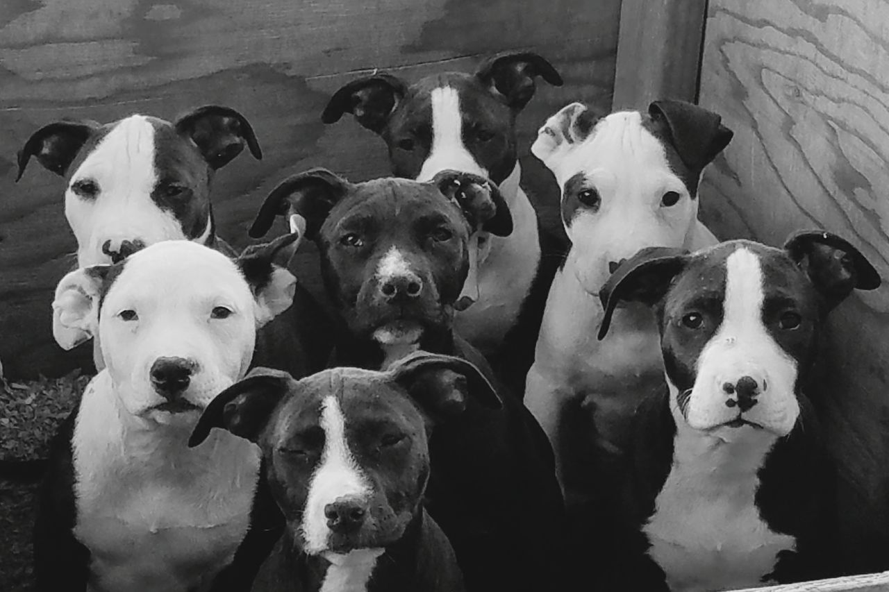 Pitbulls Puppy Dog Face Pitbullbully Puppypitbull Bully Puppies Bully Pitbull Pets Puppy Love Baby Puppies Loyalty Pyppy Puppy Insectlove Tranquil Scene Waterfront Treelined Beauty In Nature Flylove Coolstuff Pedestrian Walkway Battle Of The Cities TakeoverContrast Water Riverbank Insect