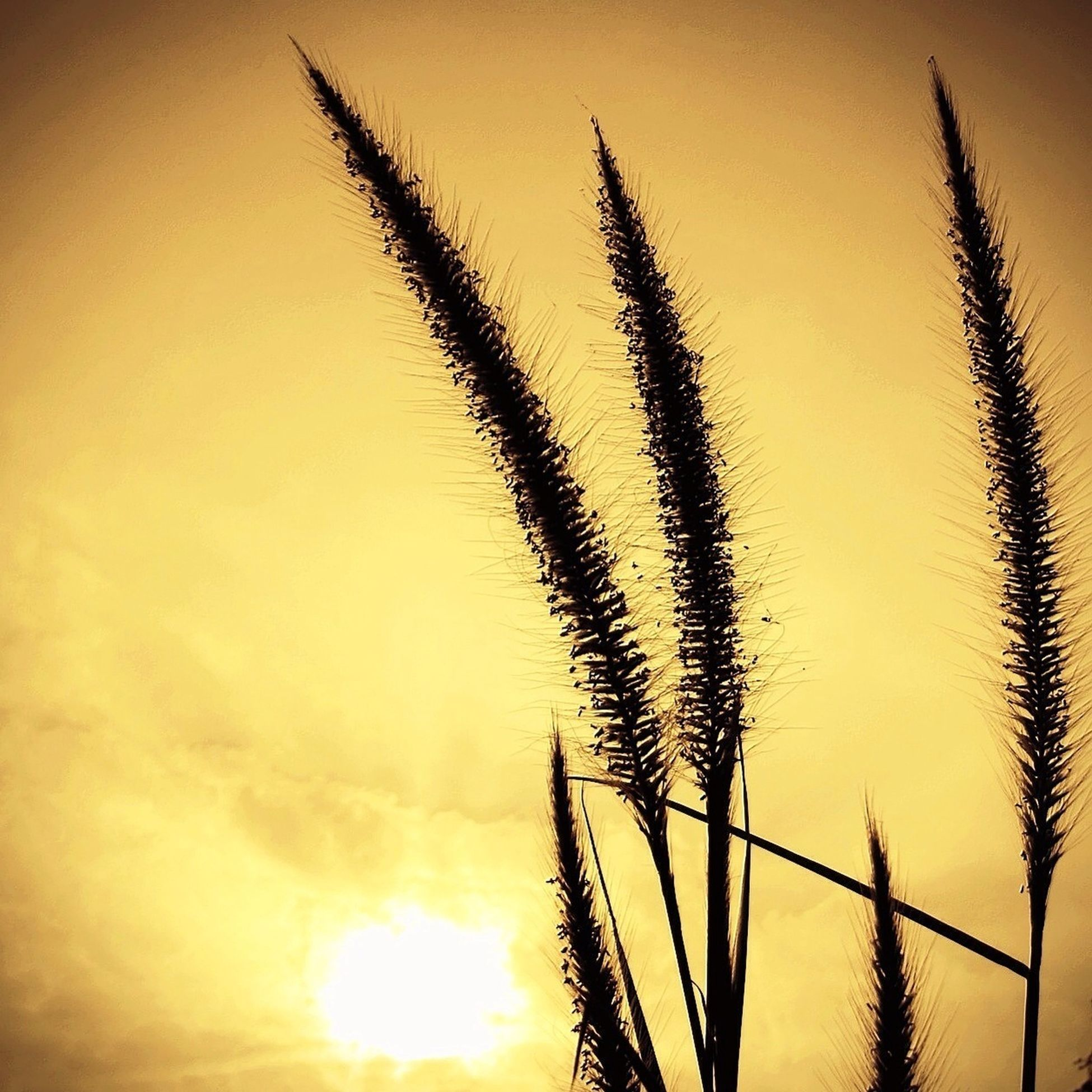 sunset, silhouette, sun, orange color, sky, tranquility, beauty in nature, palm tree, nature, growth, scenics, tranquil scene, low angle view, idyllic, sunlight, outdoors, no people, plant, cloud, tree