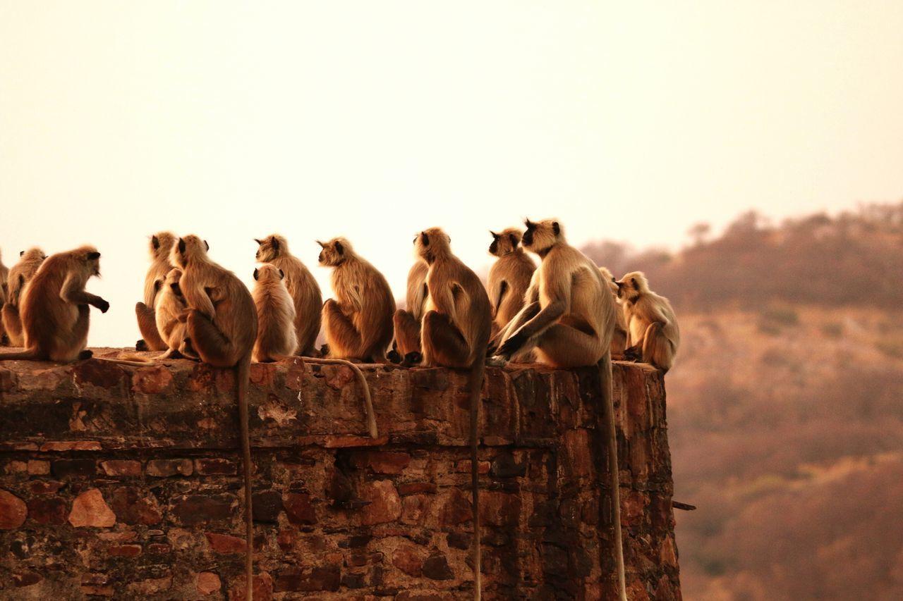 Beautiful stock photos of monkey,  Animal Family,  Animal Themes,  Animals In The Wild,  Day