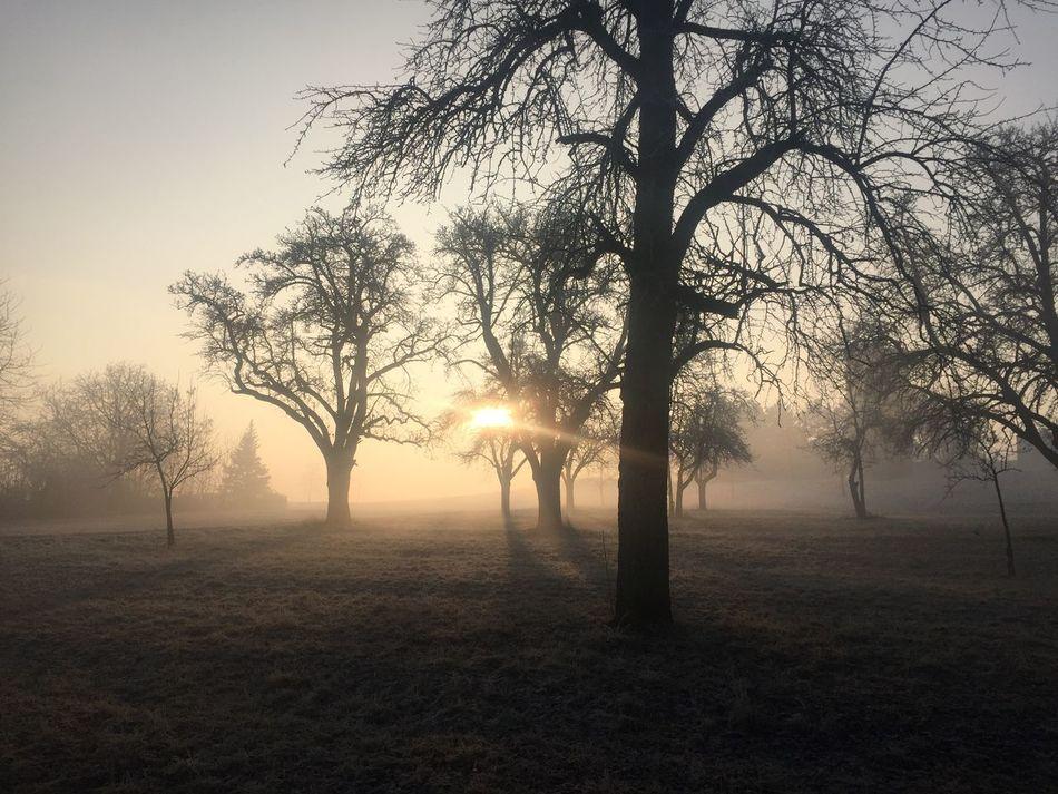 Baum Baum 🌳🌲 Bäume Fog Foggy Morgen Morgenstimmung Morning Natur Nature Nebel Schatten Shadow Sonnenaufgang Sonnenschein  Sunlight Sunrise Tree Tree Winter EyeEmNewHere