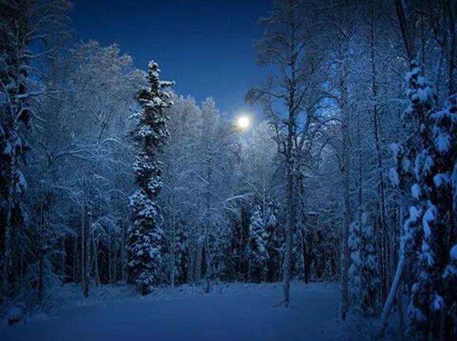 Kar Soguk Mavibeyaz Ayisigi