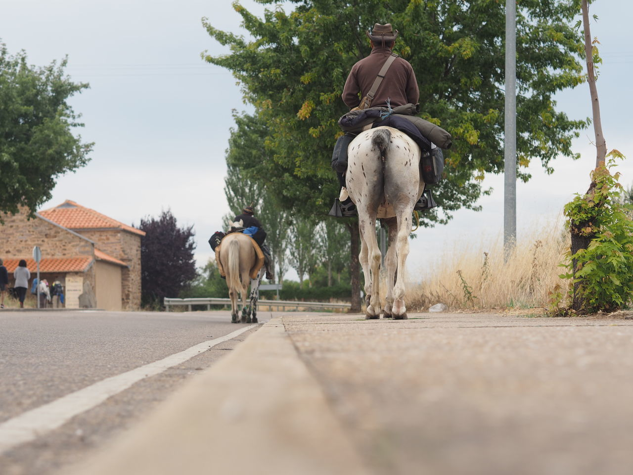Horses Riding Horses CaminodeSantiago Way Of Saint James Traveling Trekking Holiday
