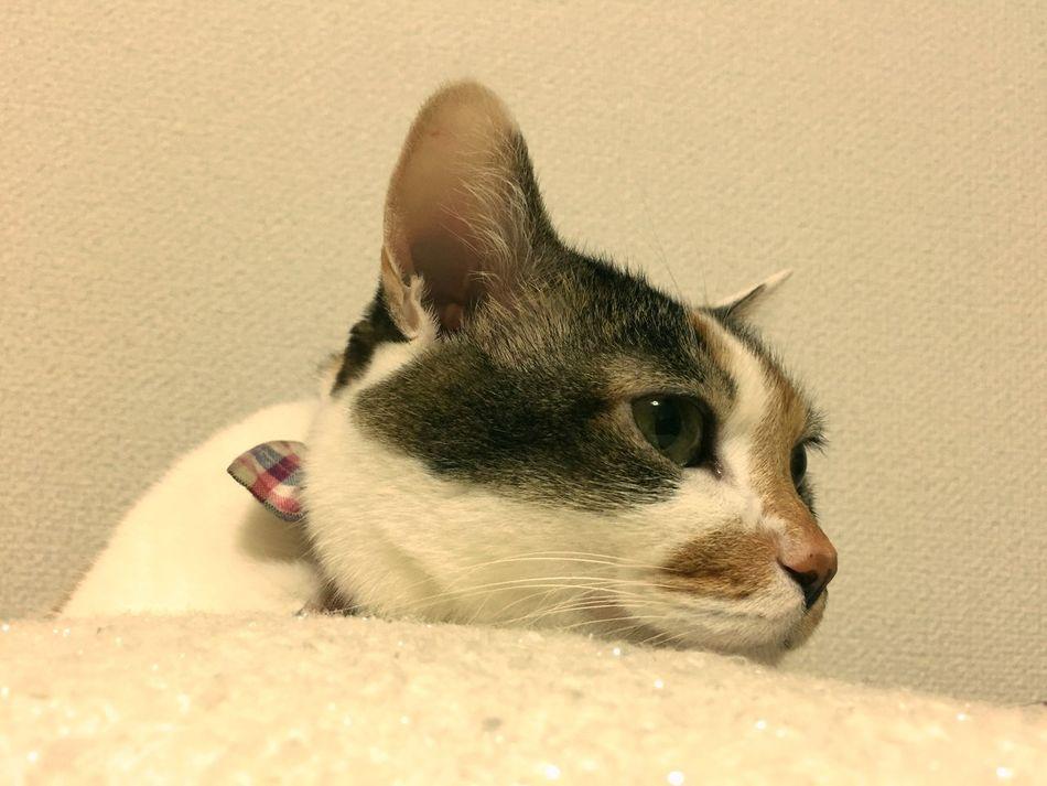 Chibita. My Cat Cat♡ Relaxing Cat Lovers IPhoneography ウチの姫様 Hello World