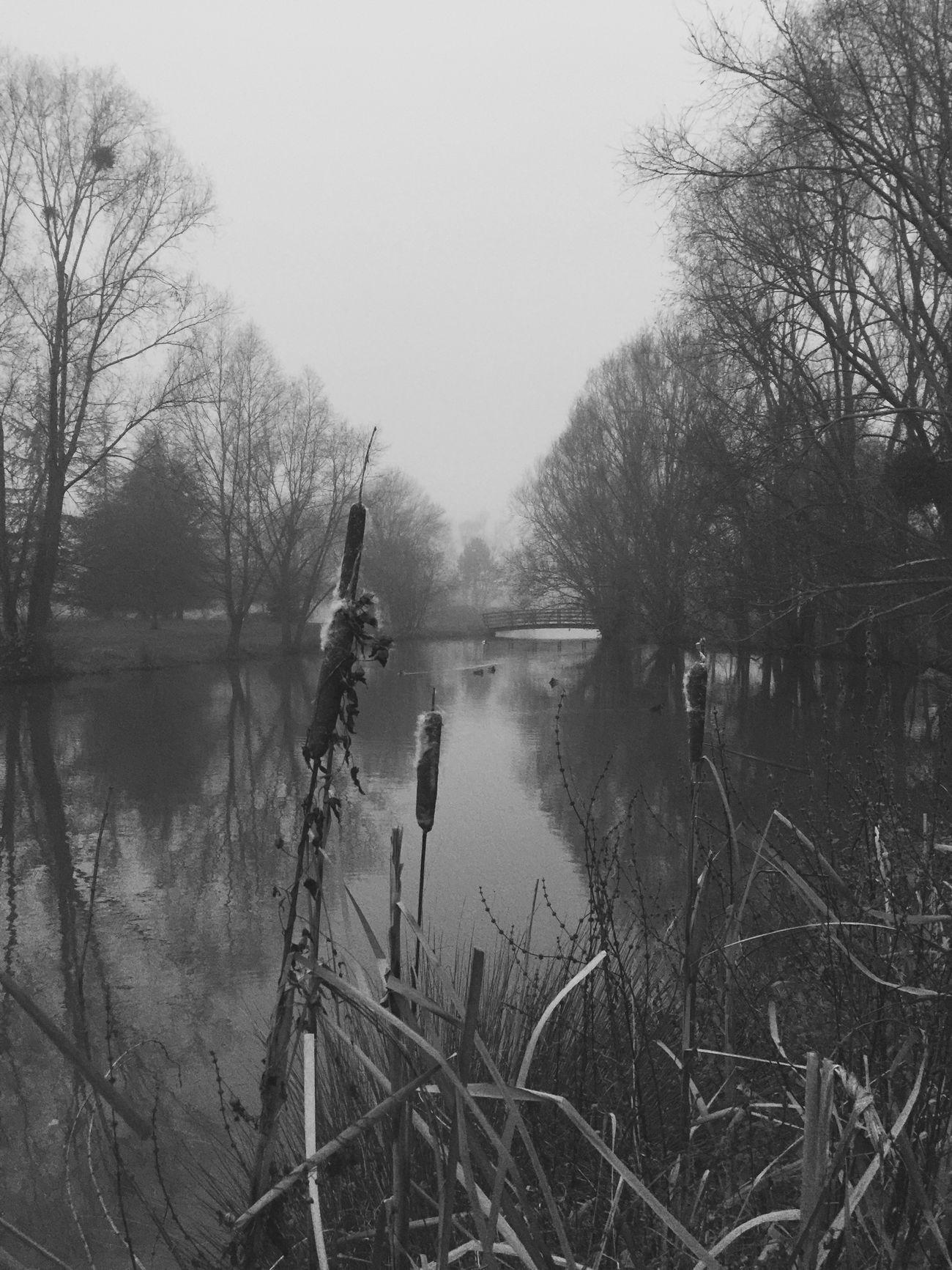Fog Foggy Foggy Day Brouillard Brume Lac Seine Et Marne Landscape Nature Paysage 77 Lake Etangs Reflection Iphone6plus IPhoneography Beautiful Sky