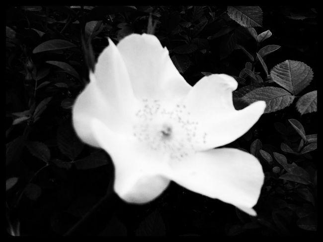 Black&white Walking Around First Eyeem Photo